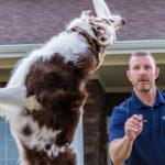 Garmin Delta Inbounds – wirtualne ogrodzenia dla psa