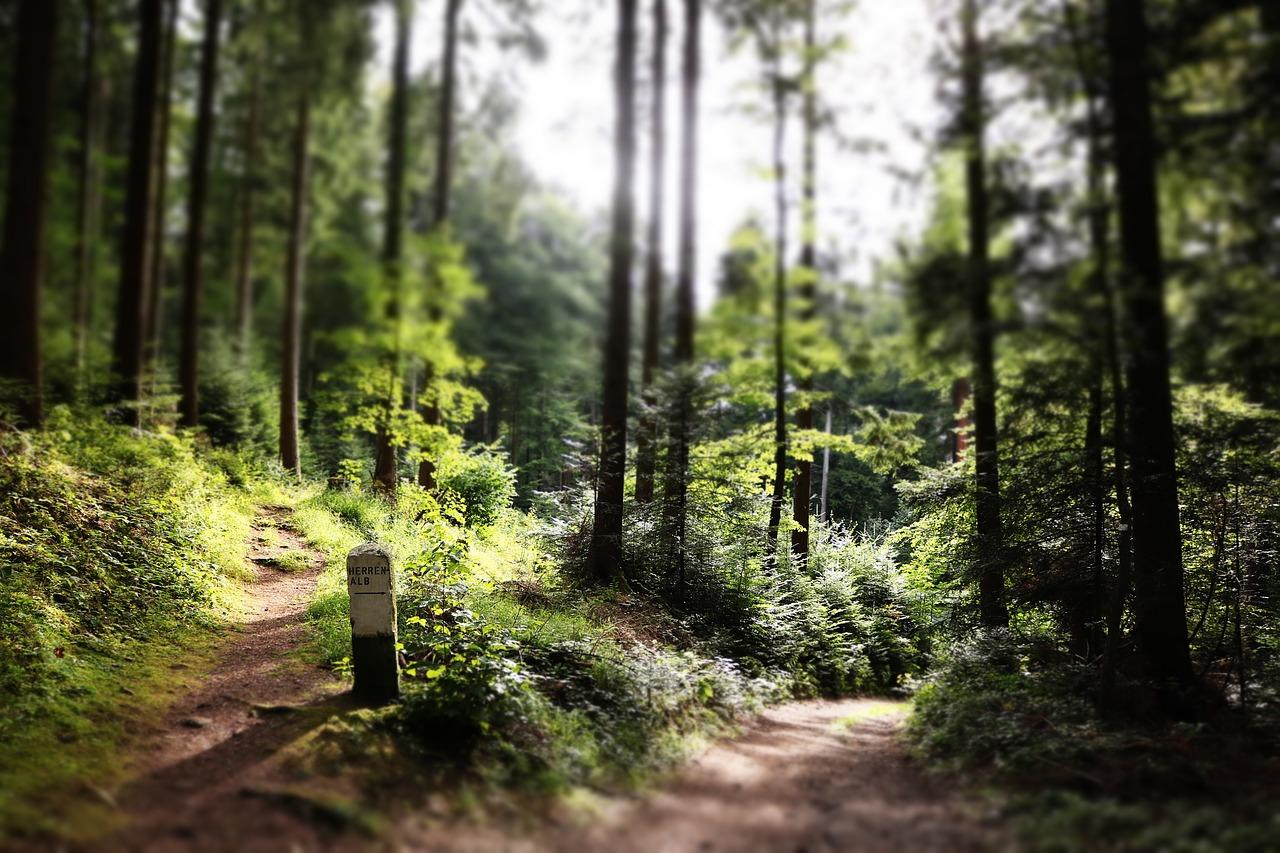 Czynniki środowiskowe wpływające na GPS